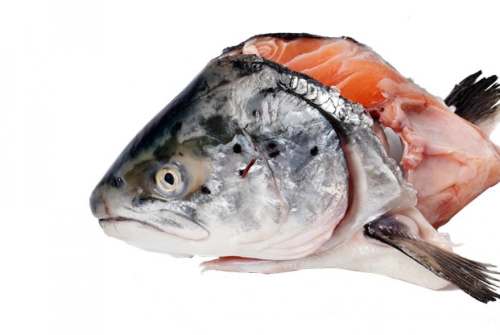 Đầu cá hồi Na Uy