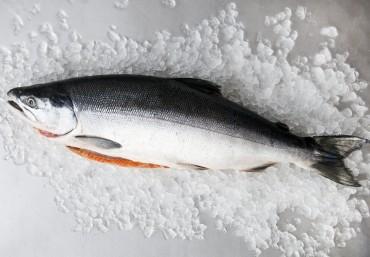Cá hồi nuôi tại Việt Nam và cá hồi nhập khẩu có gì khác nhau?