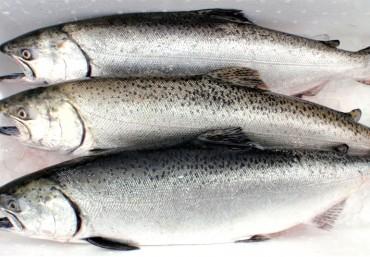 Giá cá hồi nguyên con dịp cuối năm